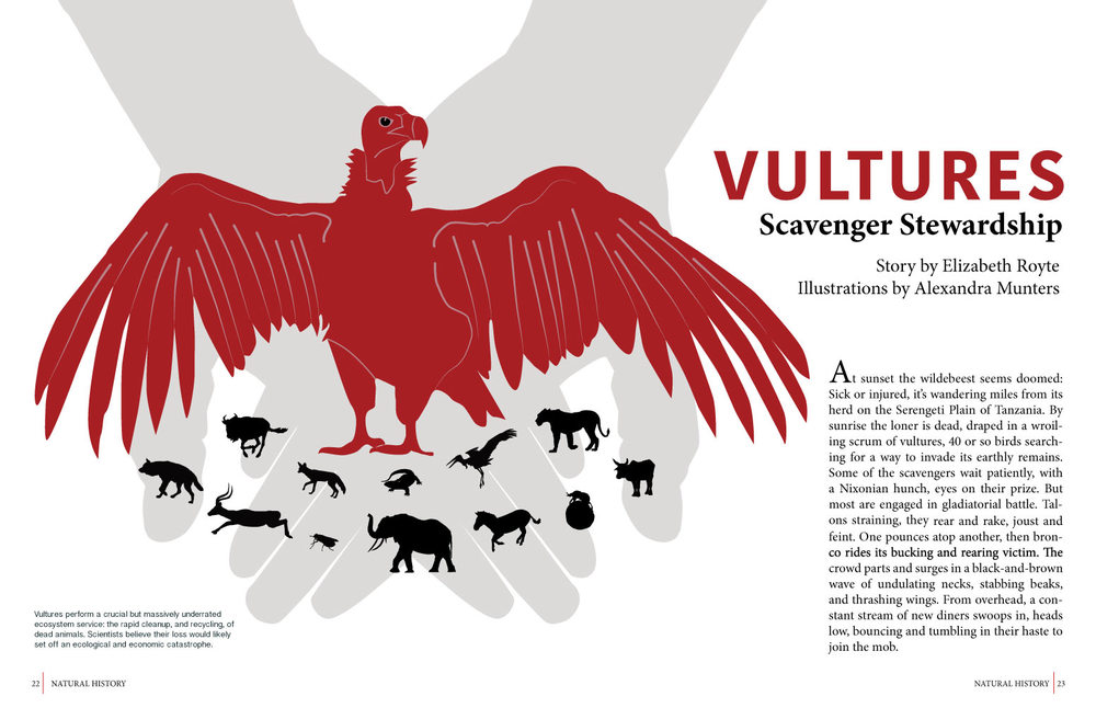 Editorial layout created in Adobe Illustrator and InDesign for an assignment during CSUMB Science Illustration program. Text from National Geographic.