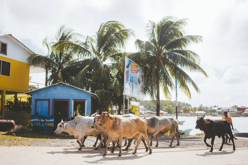 Corn Islands Nicaragua 5