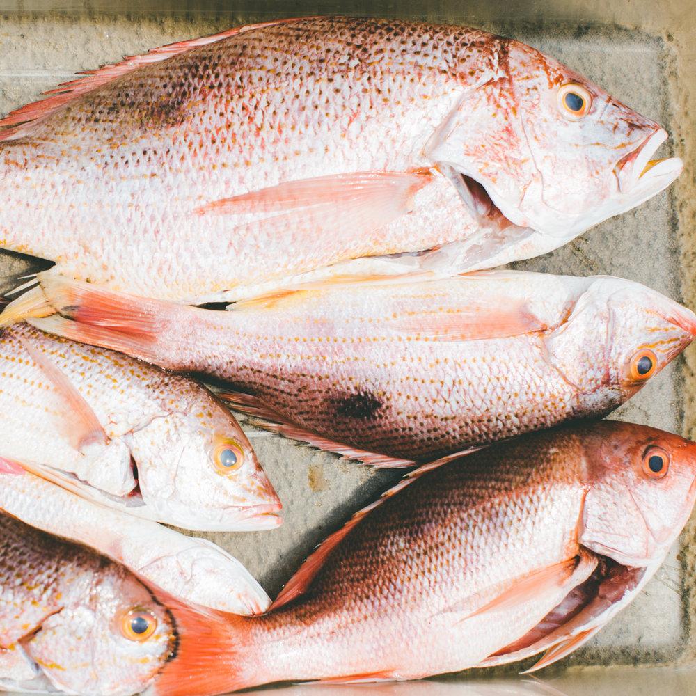Mukul Fish