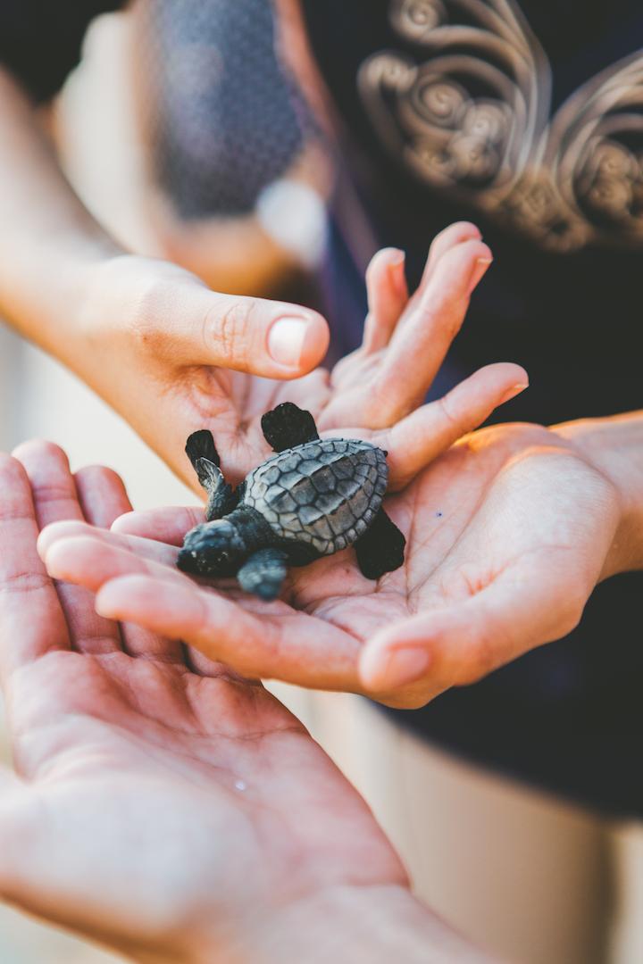 Turtle release 2.jpg
