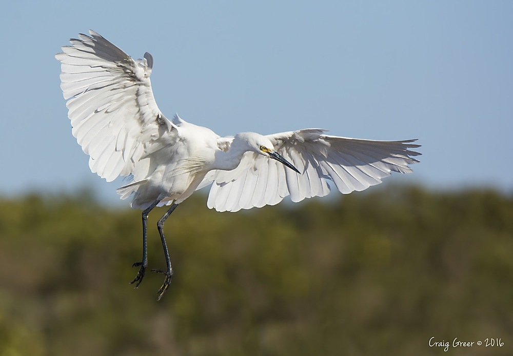 Little Egret | Bald Hill Beach, SA
