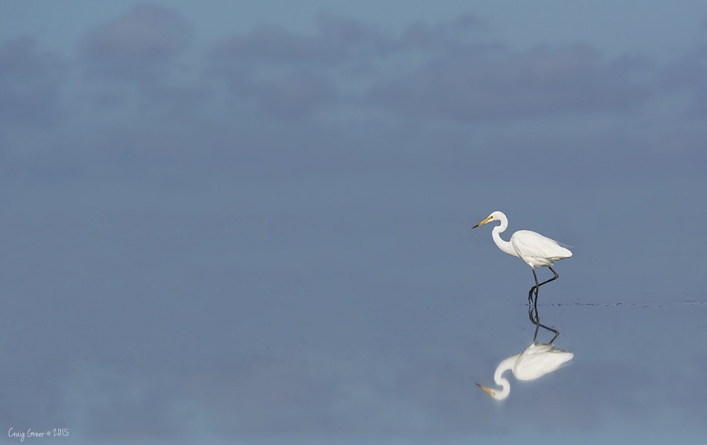 Eastern great Egret | Bald Hill Beach