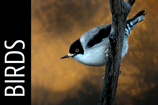 birds-gallery-icon.png