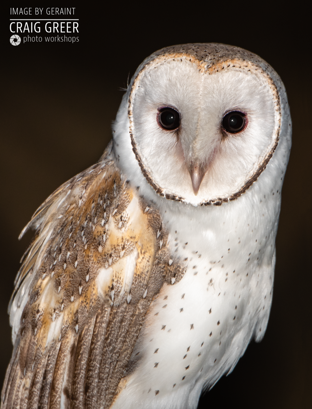 Barn-Owl-Geraint.png