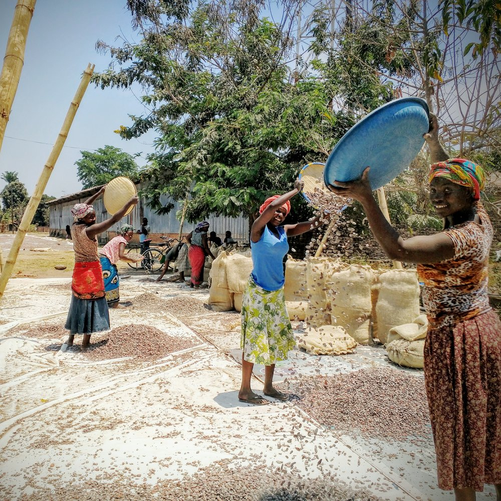technoserve_tanzania_womendryingcocoa2.jpg