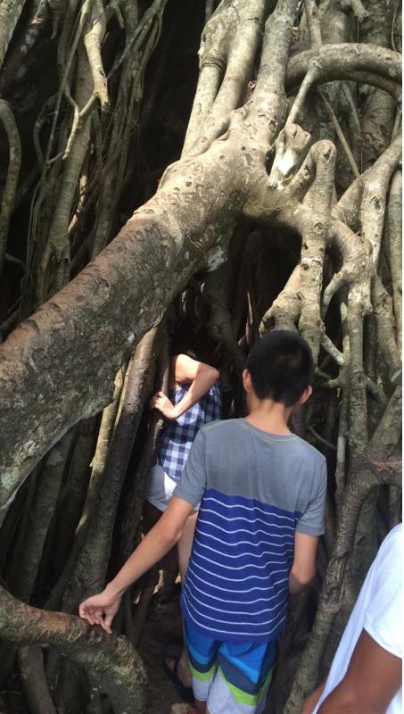 MILLENNIUM BALETE TREE  Photo by @ seekertravels
