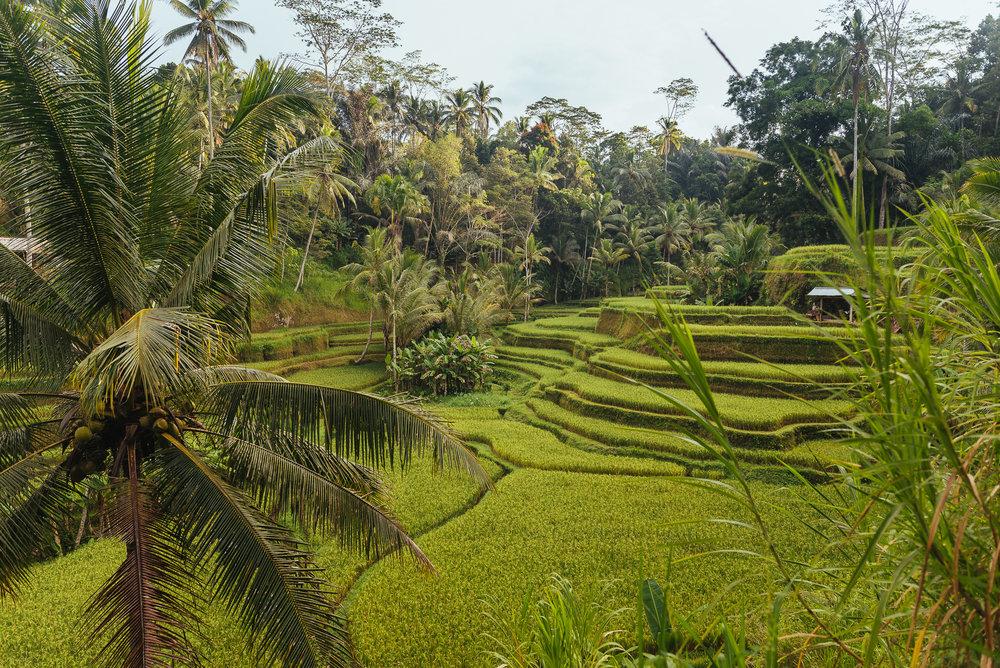 indonesia_2017-278.jpg