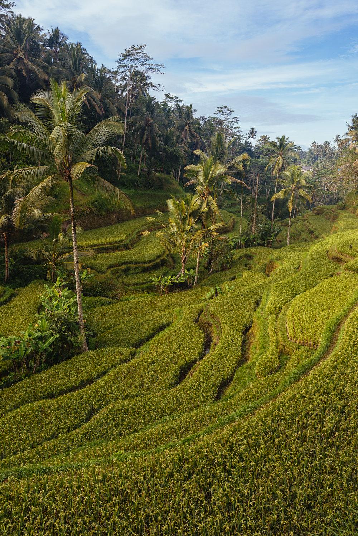 indonesia_2017-307.jpg