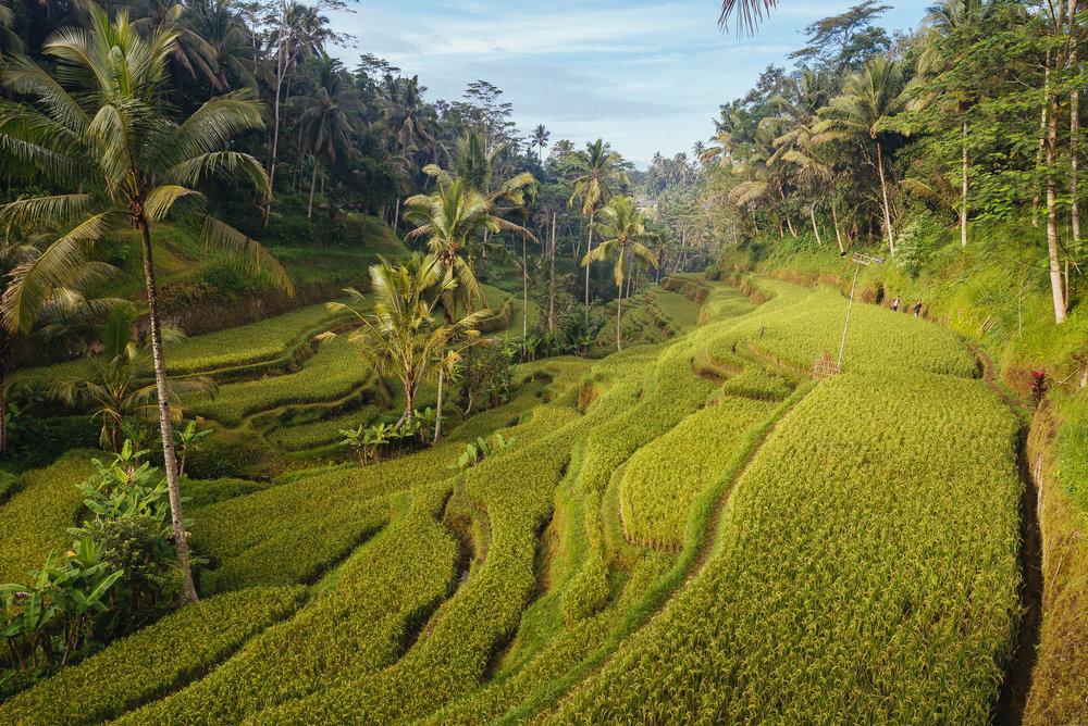 indonesia_2017-305.jpg