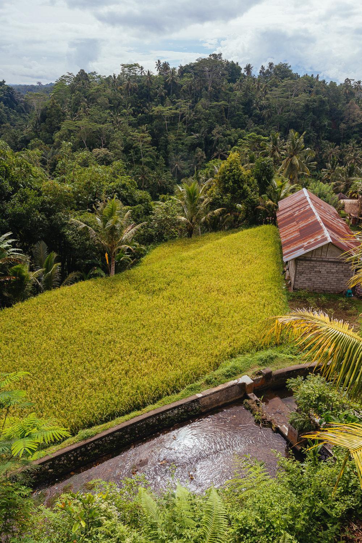 indonesia_2017-364.jpg