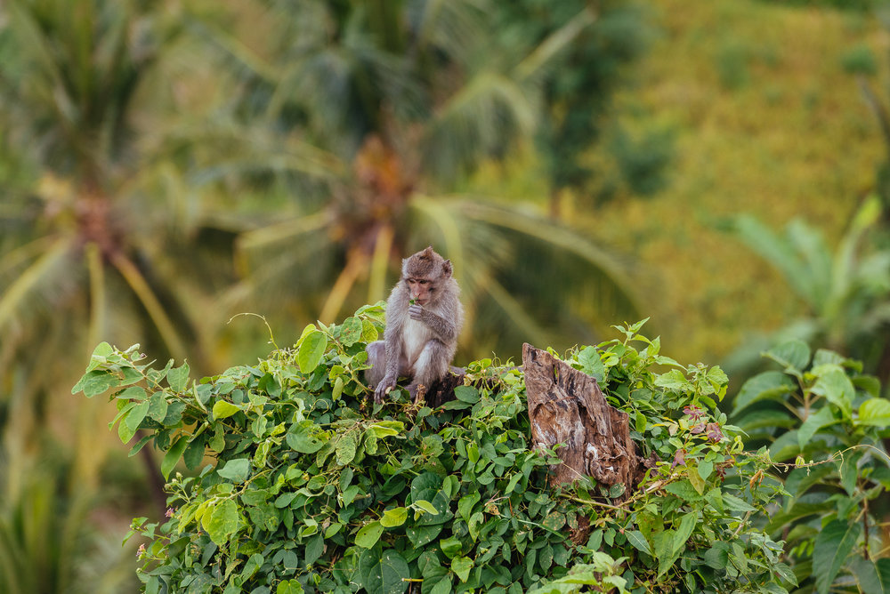 indonesia_2017-791.jpg