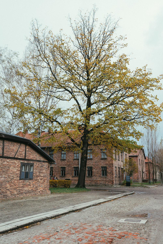 Krakow-74.jpg