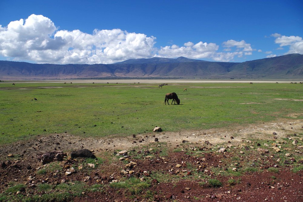 Ngorongoro crater midday.jpg
