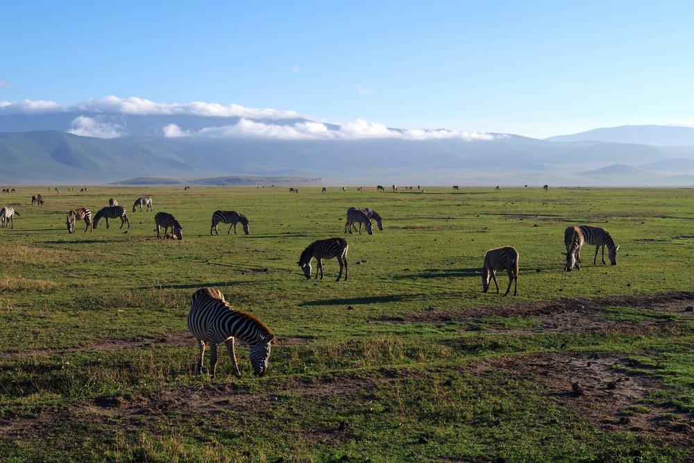 Ngorongoro crater floor.jpg