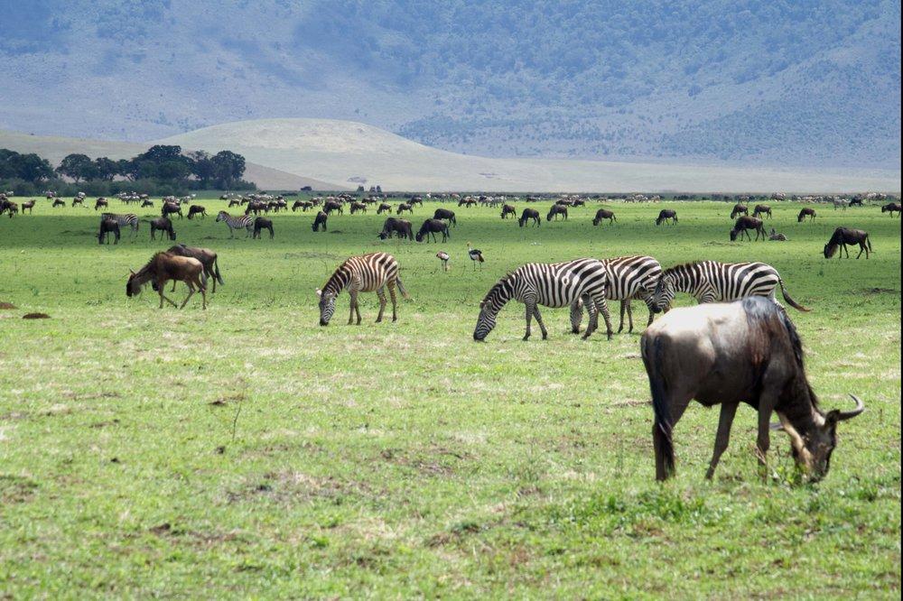 Ngorongoro landscape.jpg