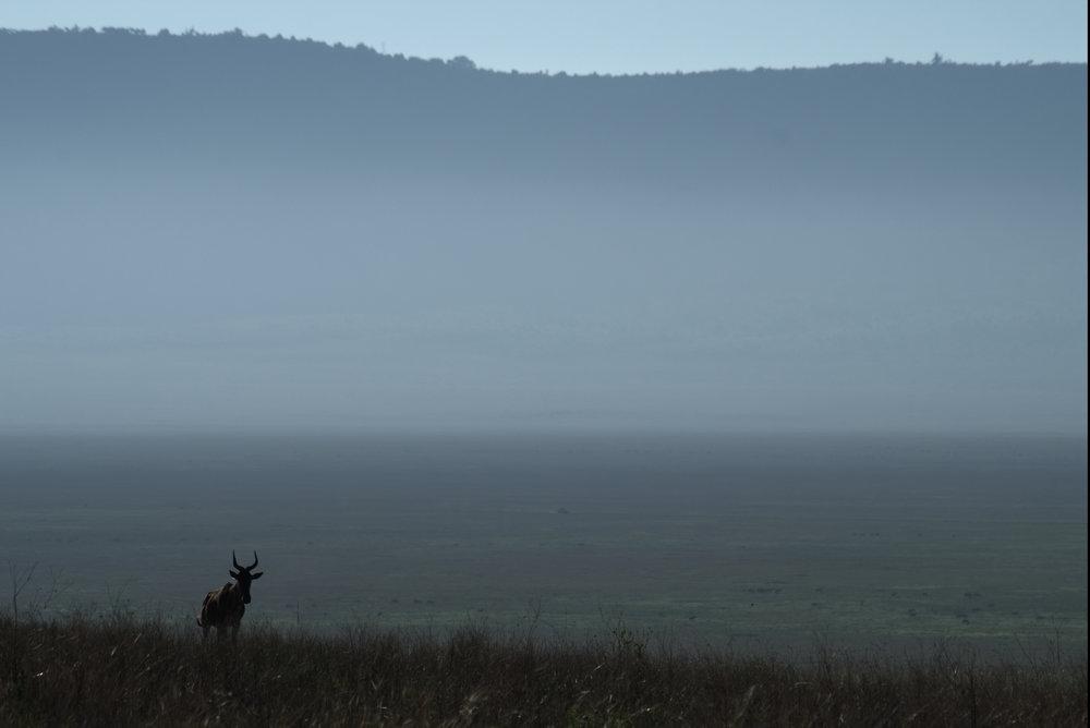 Ngorongoro mist.jpg