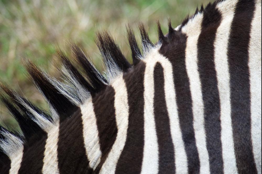 Ngorongoro neck.jpg