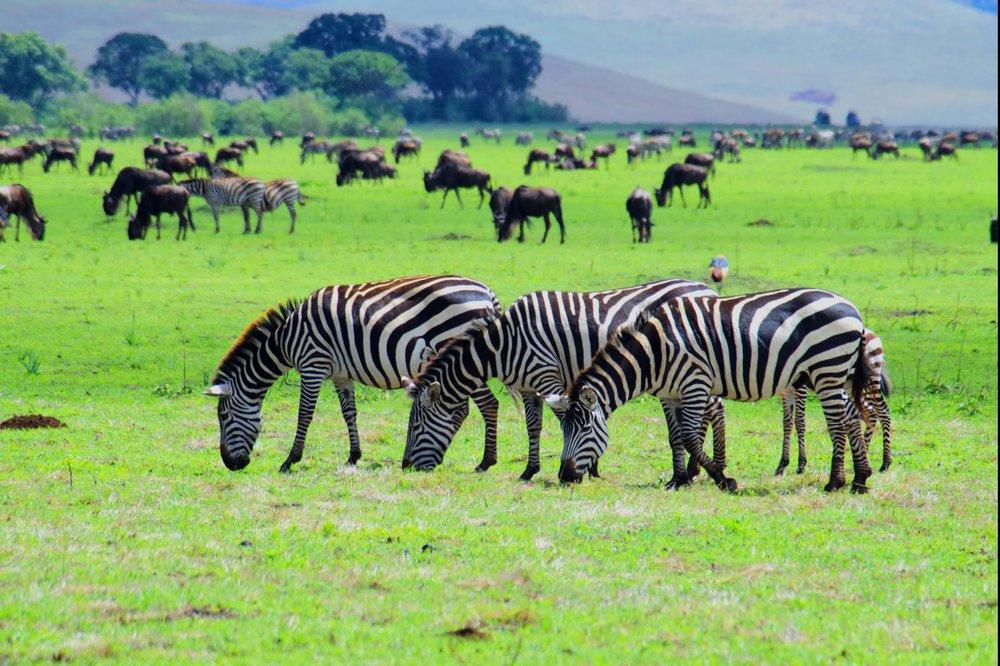 Ngorongoro three amigos.jpg