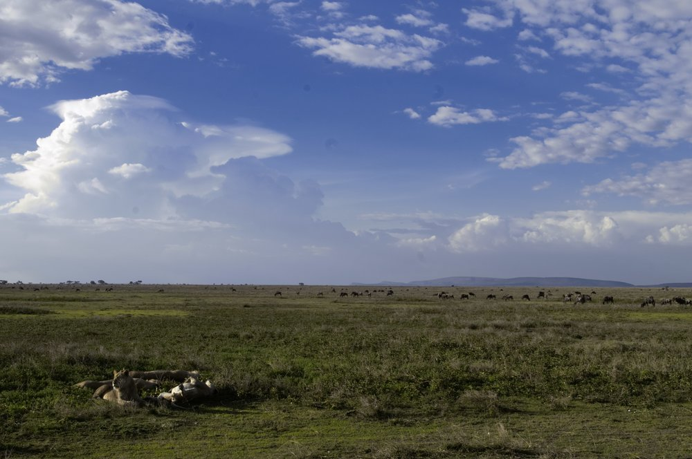 Serengeti landscape.jpg