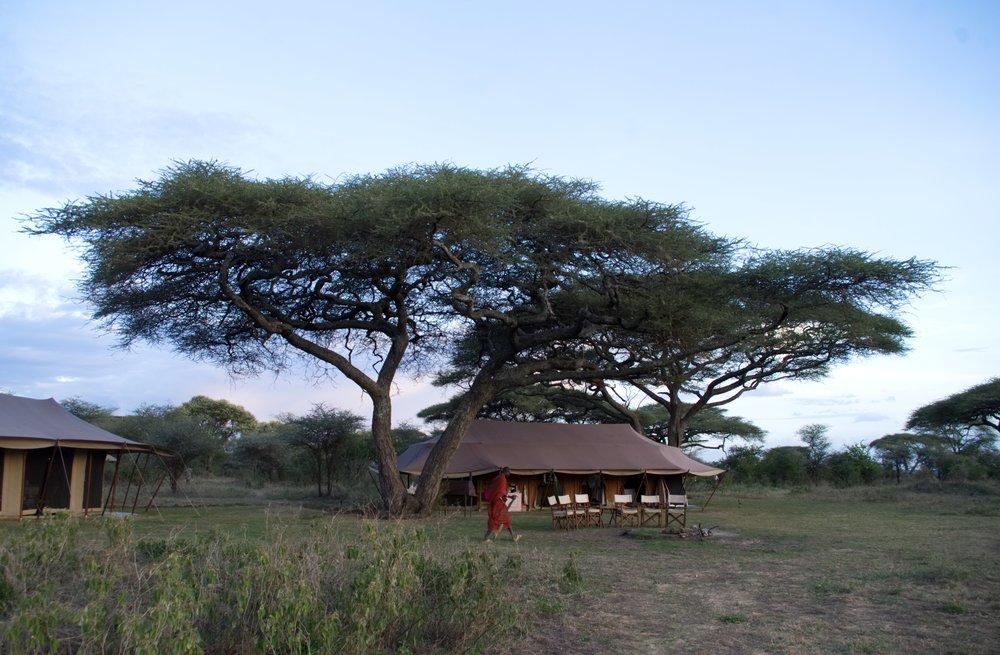 Serengeti Kusini camp.jpg