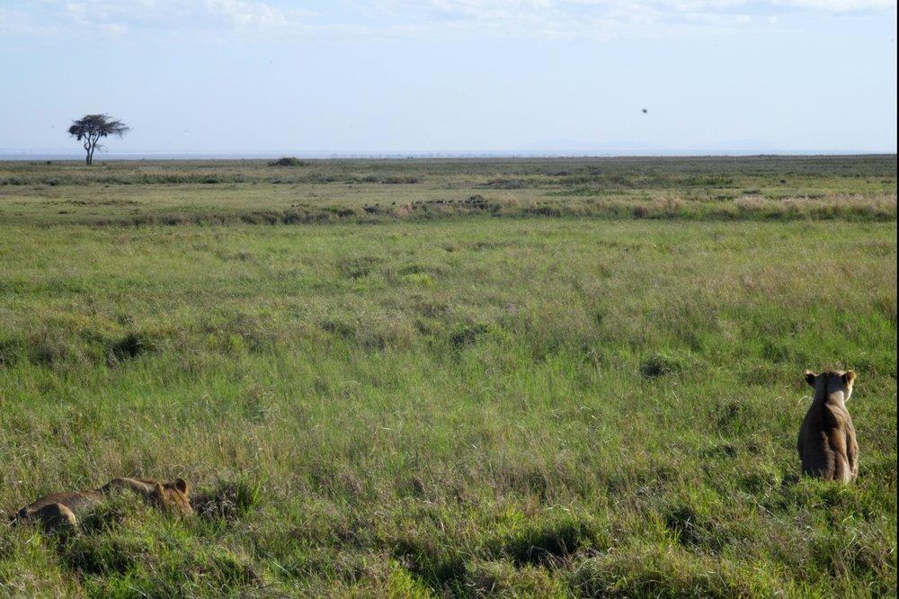 Serengeti plain.jpg