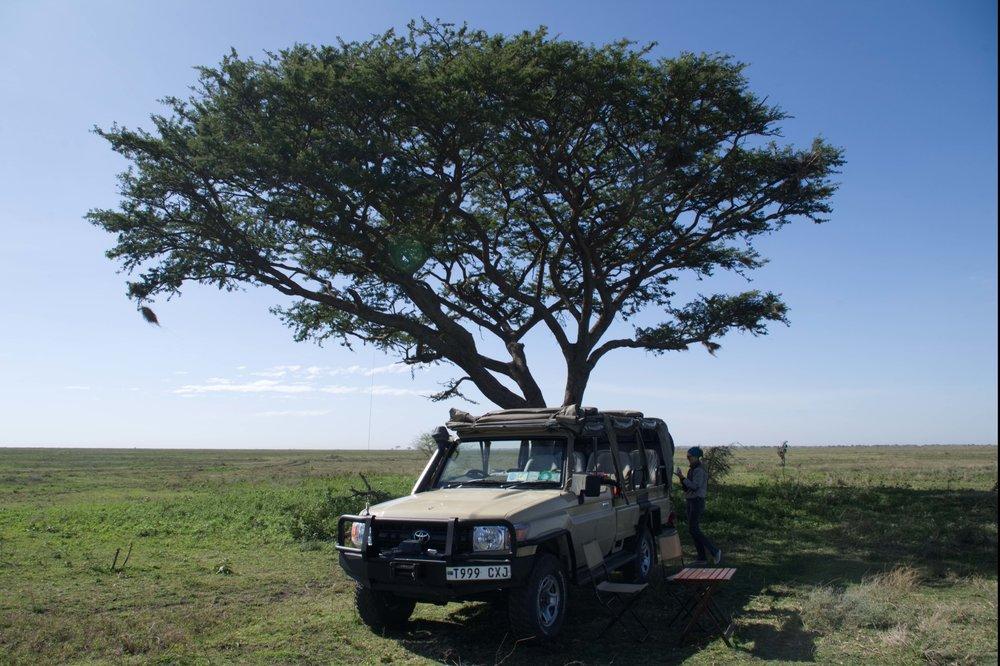 Serengeti wheels.jpg