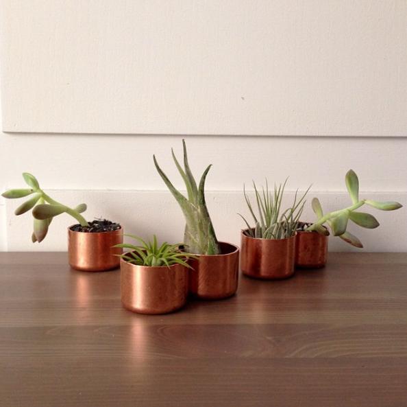 Brass-Plants.jpg