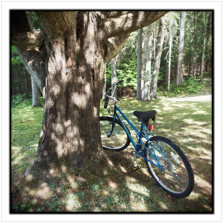 bike and tree / Rist Camp ~ Newcomb, NY - in the Adirondack PARK