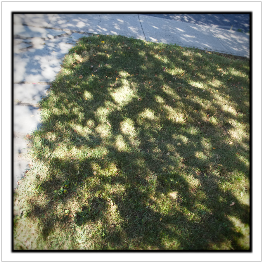 lawn and sidewalk