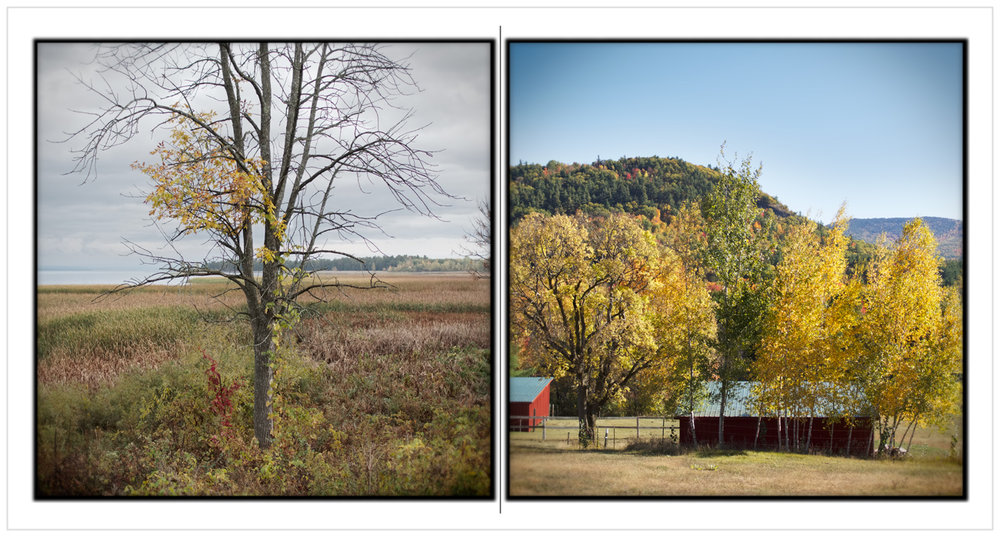marsh tree / horse farm ~ Peru, NY / Clintonville, NY - in the Adirondack PARK (click to embiggen)