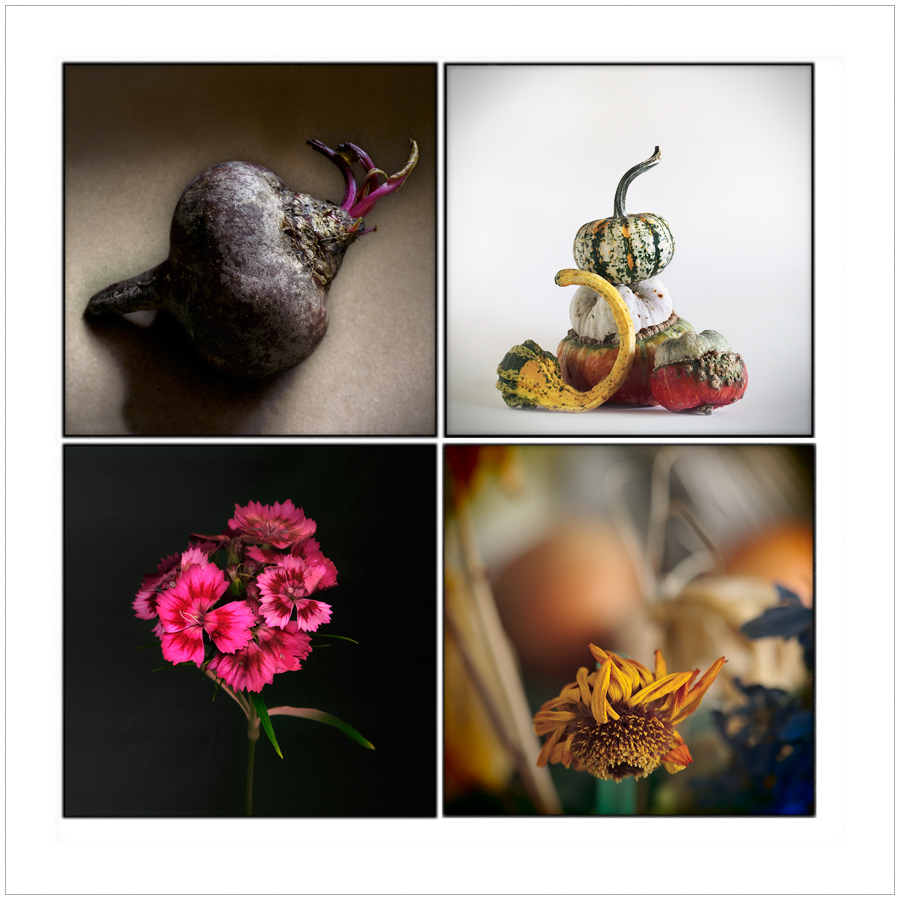 still lifes / made   ~ (click to embiggen)