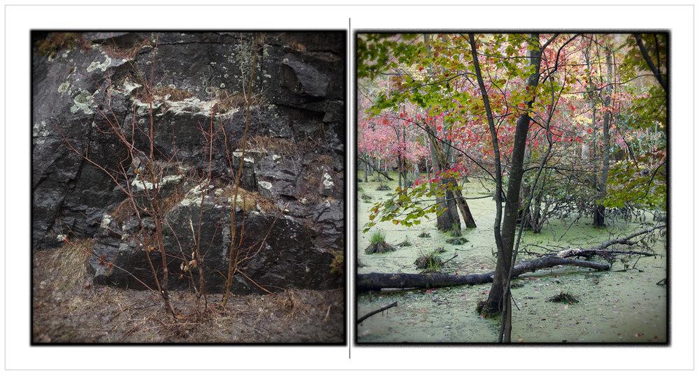 spring saplings   /   bog ~  (embiggenable)