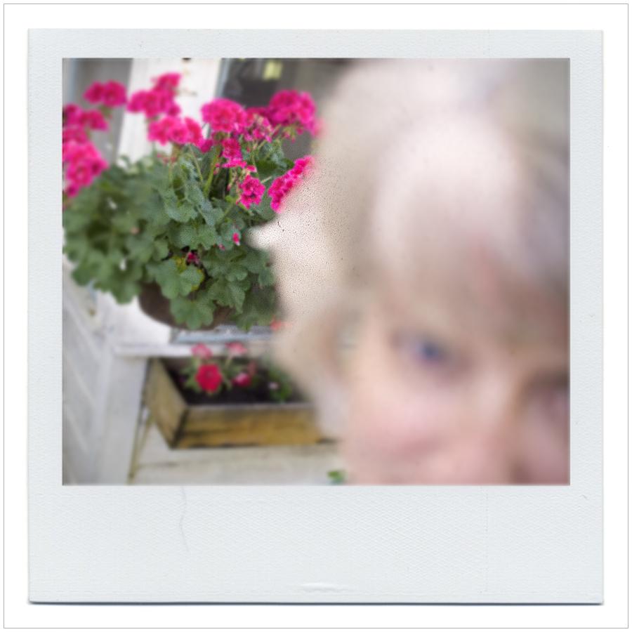ssjaciflowers.jpg