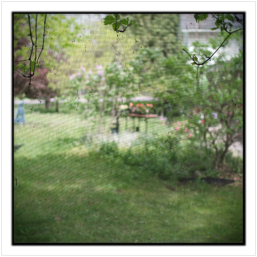 yard through screen ~ Chaffey's Lock, ONT CA (embiggenable)