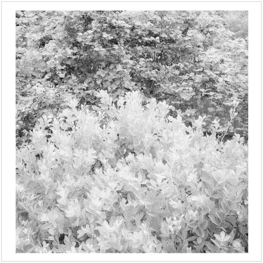 foliage   ~ (embiggenable) • iPhone
