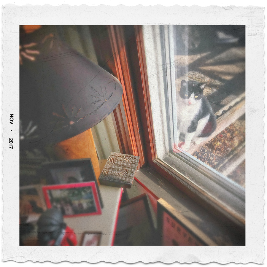 cat in window    ~ in the Adirondack PARK (embiggenable) •iPhone