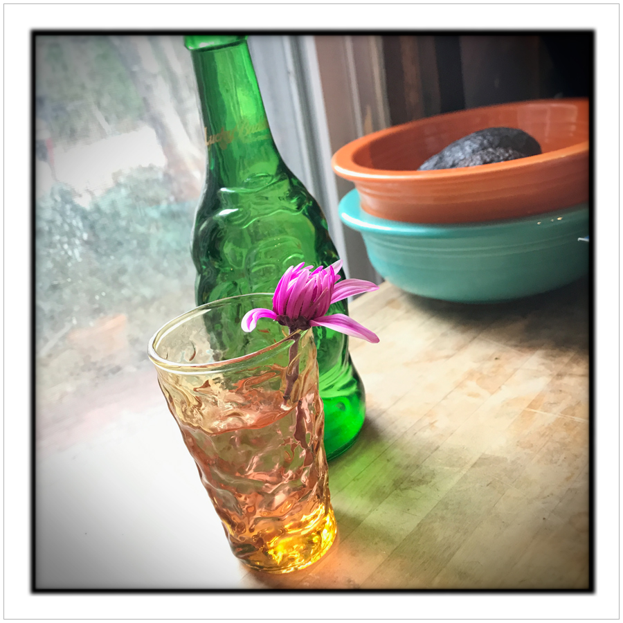 glass, flower and bottle   ~ Pittsburgh, PA (embiggenable) • iPhone