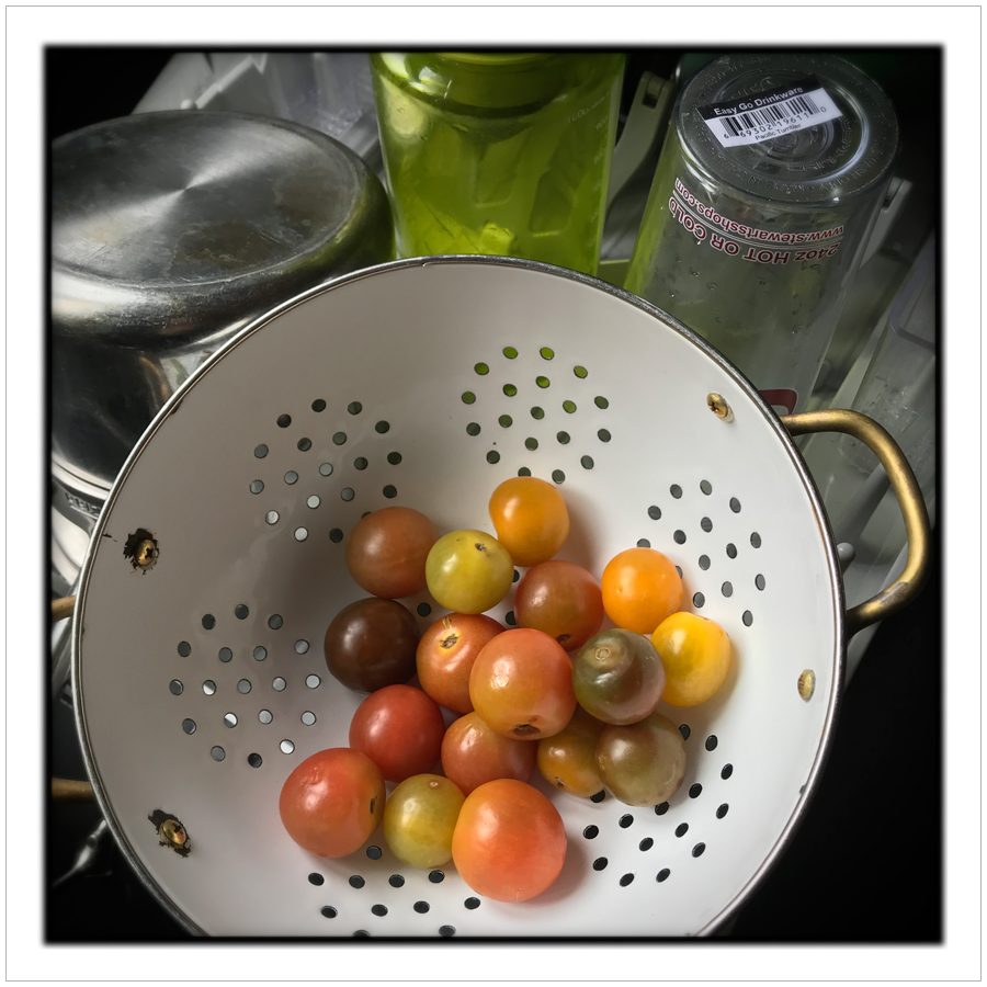tomatoes in strainer   ~ in the Adirondack PARK (embiggenable) • iPhone