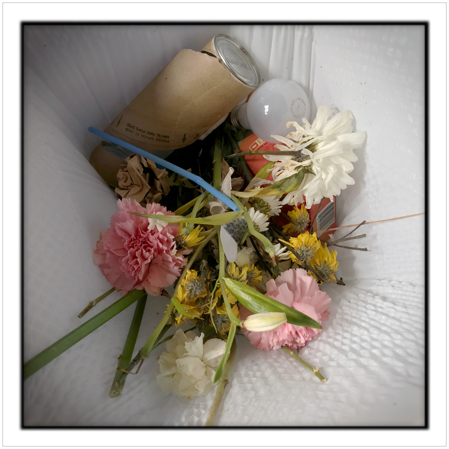 discarded flowers   ~ embiggenable • iPhone