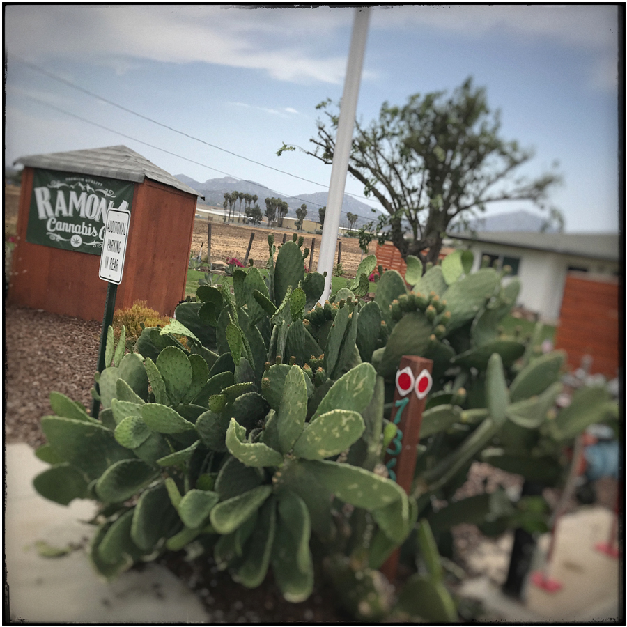 plants   ~ Ramona, California • iPhone