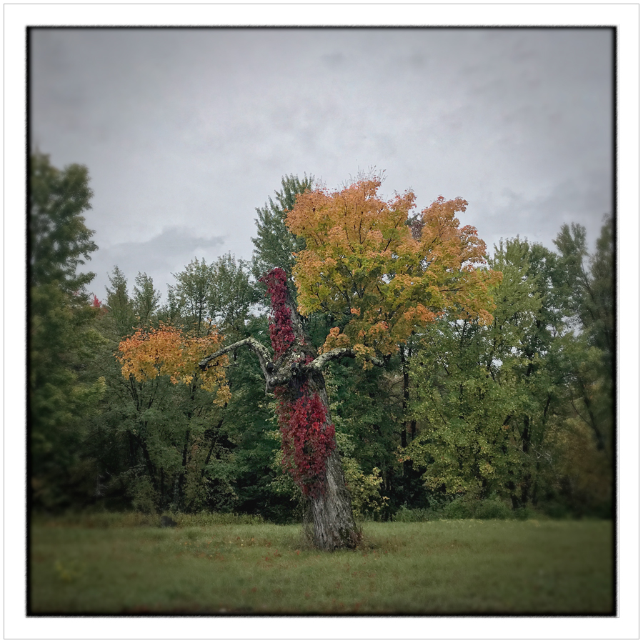 fall color   ~ Au Sable Forks / Adirondack PARK - (embiggenable) • iPhone