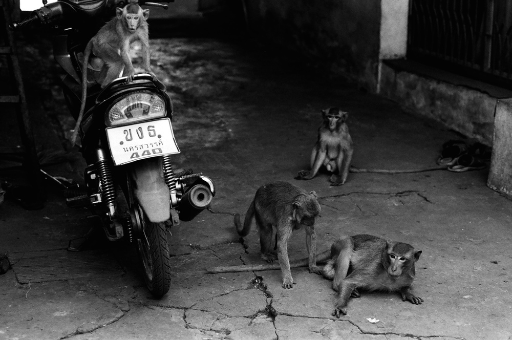 Monkeys & Motorcycle