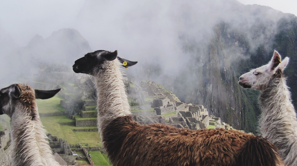 And finally atop Machu Picchu making friends
