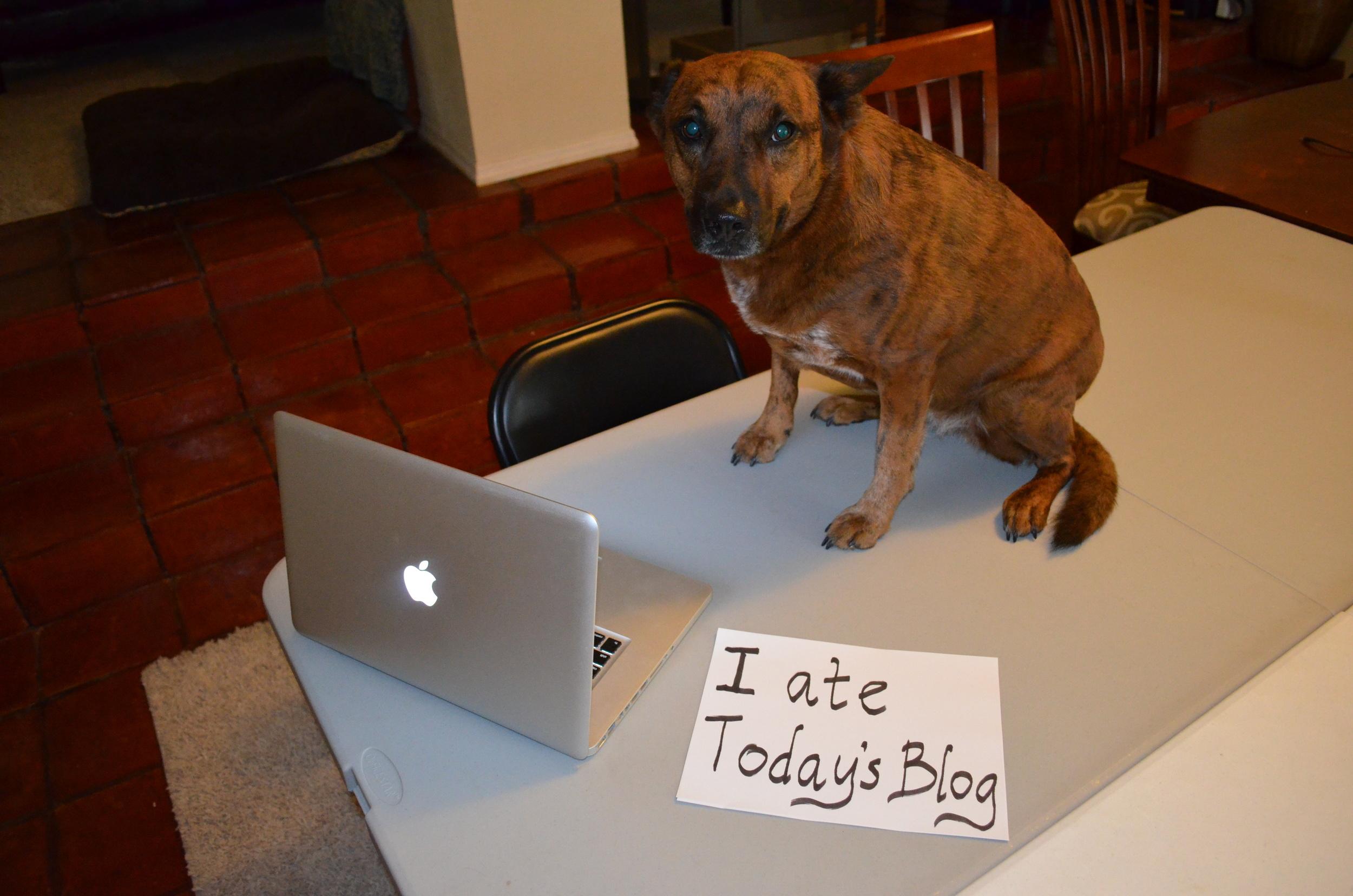 Social media blog shaming