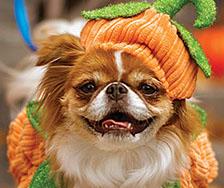Petco Boo-tique Halloween Ad