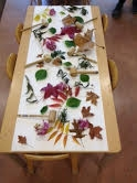Two-Year Old Preschool Program - Science Provocation