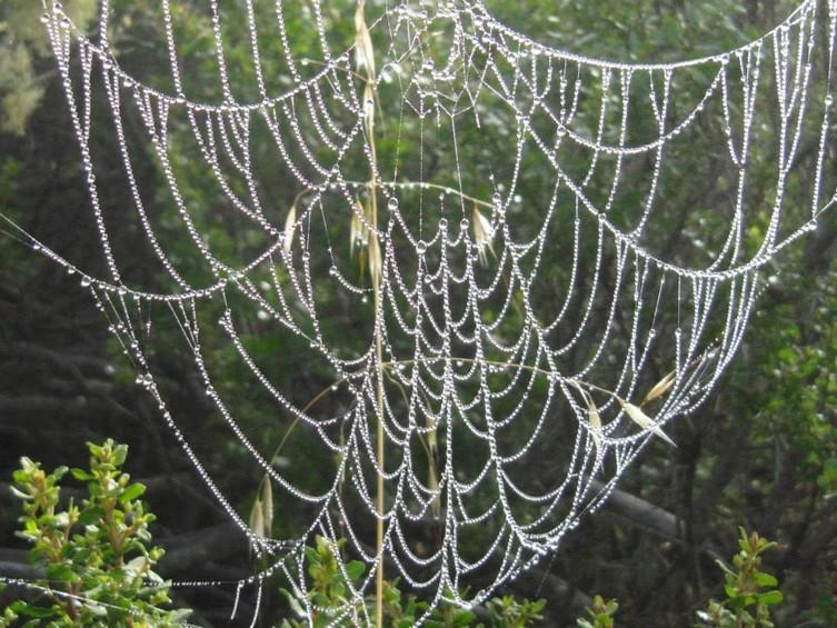 754_BWS_stinson_spider_web.jpg