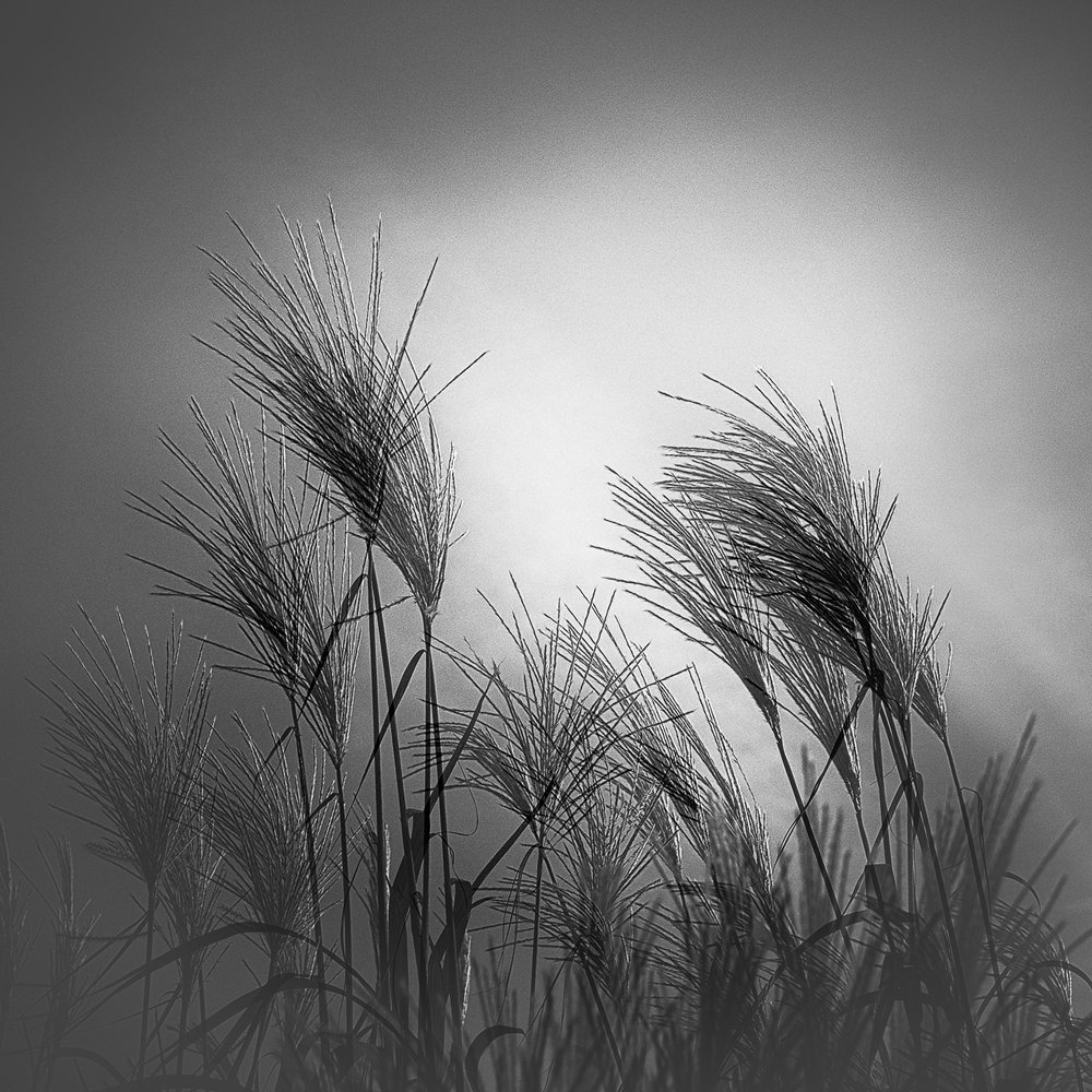 Graceful Grasses