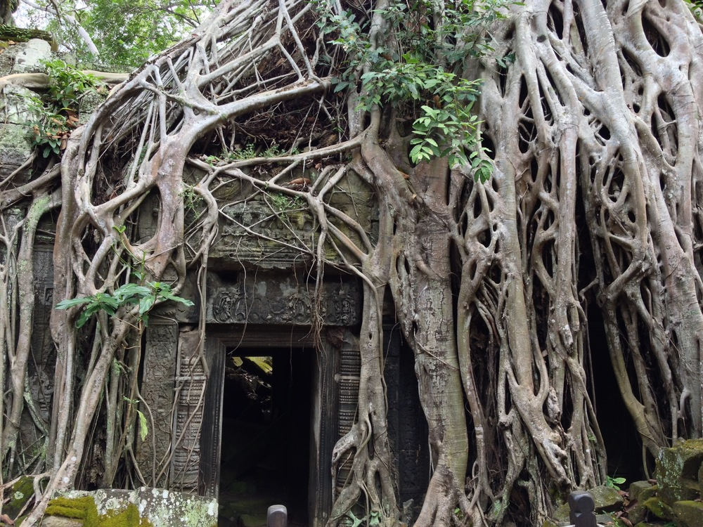 Ta Prohm Temple, also known as the Jungle Temple.