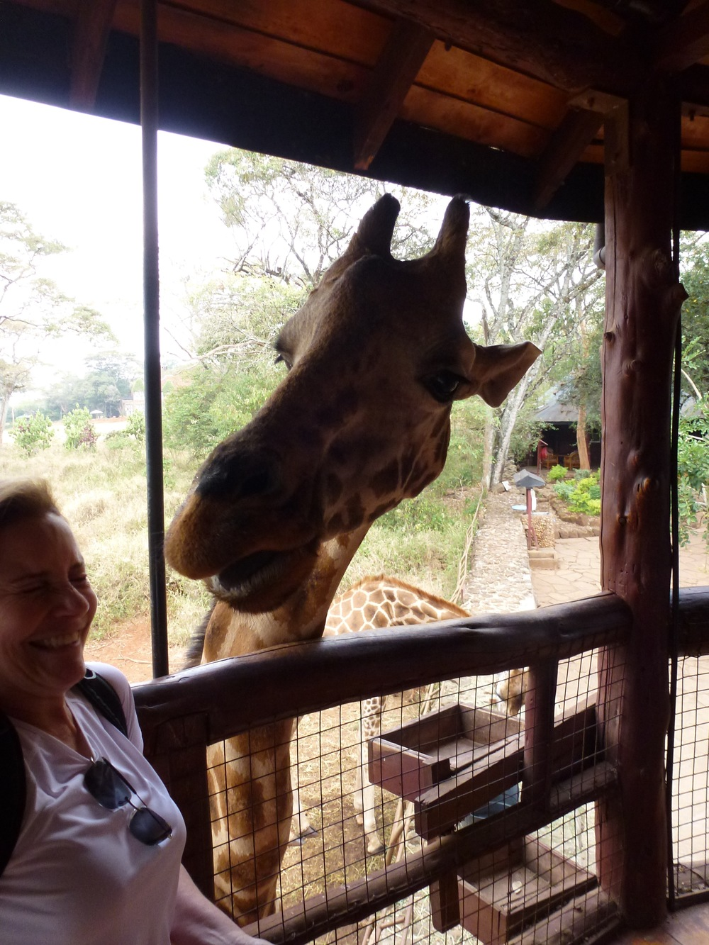 Sharing a few laughs with some giraffes.